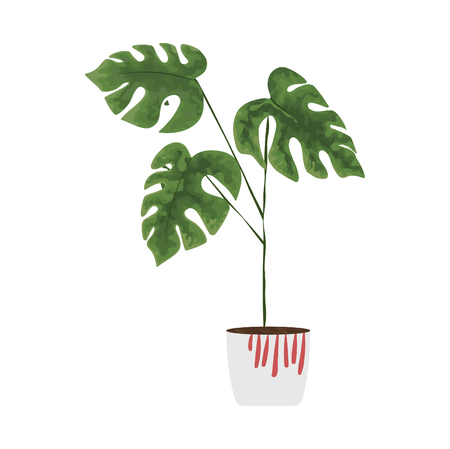 isolated objects of indoor plants in watercolor style. palm