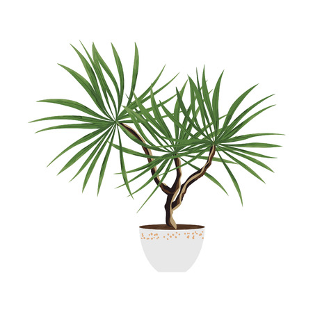 isolated objects of indoor plants in watercolor style. ficus