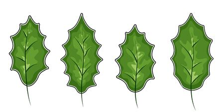 Christmas holly berry leaves isolated. Vector illustration. Traditional Christmas decoration in flat design. vector illustration.