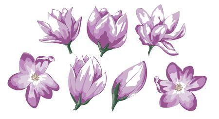 Conjunto de ilustración acuarela dibujada a mano Red Apple Flowers. Vector, aislado sobre fondo blanco. Elemento para el diseño de invitaciones, carteles de películas, telas y otros objetos. Ilustración de vector
