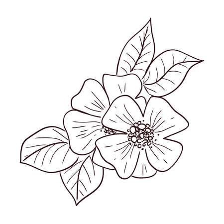 Outline Colouring Stock Vector Illustration And Royalty Free Outline  Colouring Clipart