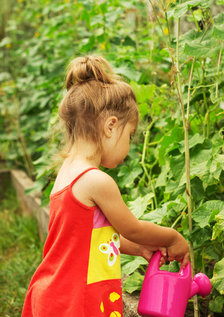 watering plant: Cute little girl watering plant watering can