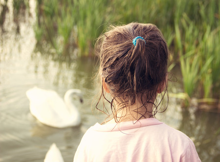 little girl looks on a swan standing at water at sunset photo