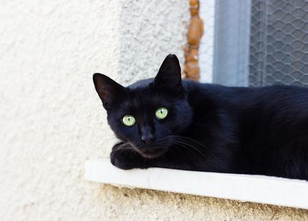 black cat at summer day