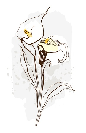 stalk flowers: Calla  Floral illustration of blooming flowers