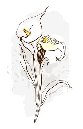 flores exoticas: Calla floral ilustraci�n de flores que florecen