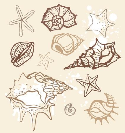 cozza: Sea collezione conchiglie disegnata a mano illustrazione vettoriale Vettoriali