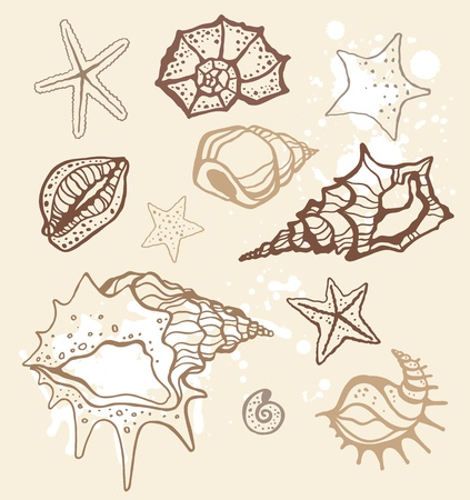 Sea shells collection  Hand drawn vector illustration Stock Vector - 12961421