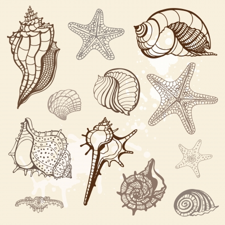 etoile de mer: Grange de la mer de collecte coquilles illustration vectorielle Handdrawn Illustration