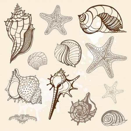 seestern: Grange Muscheln Sammlung Handdrawn Vektor-Illustration