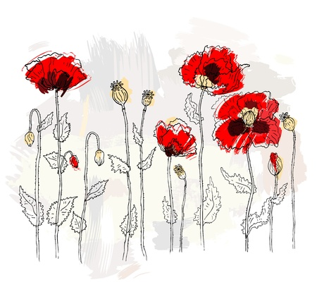 poppy leaf: Red poppies on white background