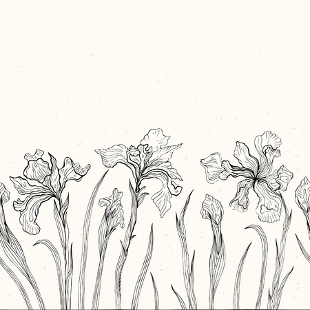 iris flower: Hand drawn Iris  White background  Seamless pattern