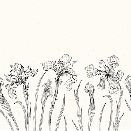 iris flower: Hand drawn Iris  White background  Seamless pattern