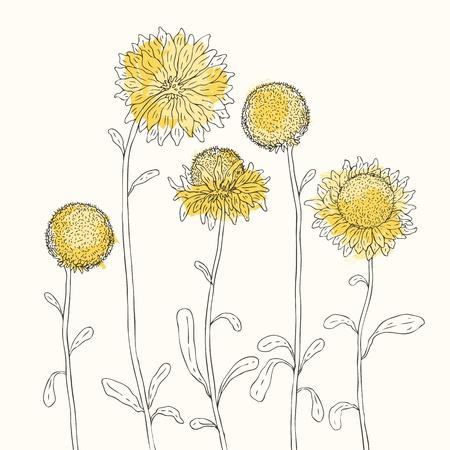 graine tournesol: Tournesols jaunes sur fond illustration vectorielle blanc