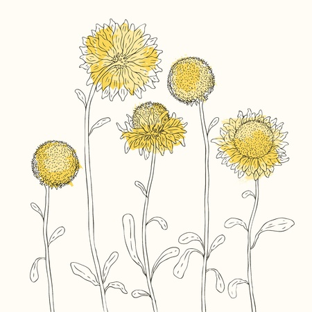 black seeds: Yellow sunflowers on white background  Vector illustration