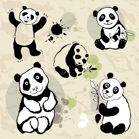 Pandas collection illustration on crumpled paper  Vector