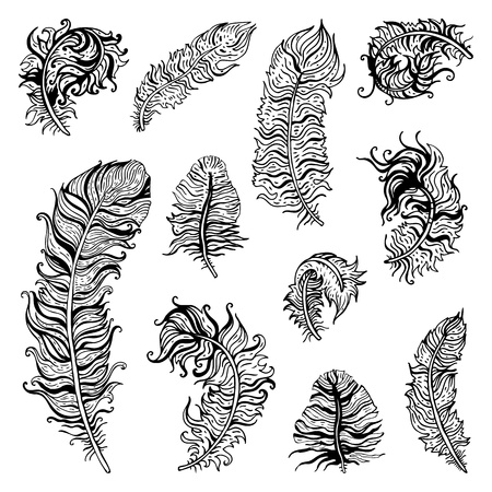Vintage Feather set  Hand drawn illustration Stock Vector - 17333561
