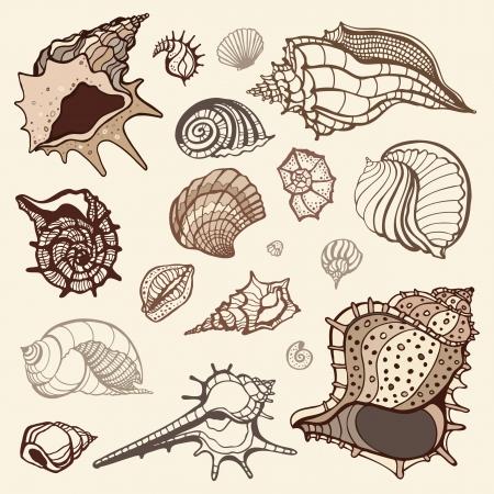 グランジ海の貝のコレクション手描き下ろしイラスト 写真素材 - 18121651