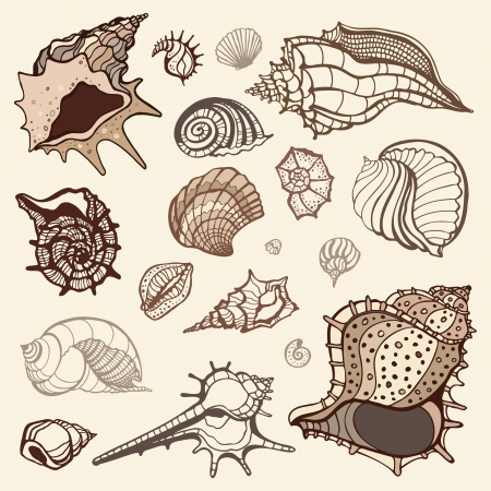 Grange Sea shells collection  Hand drawn illustration Vector