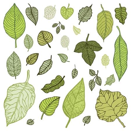 hojas de arbol: Hojas verdes, elementos de diseño establecido Ilustración Vector aislado