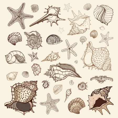 Sea shells collection  Handdrawn vector illustration illustration