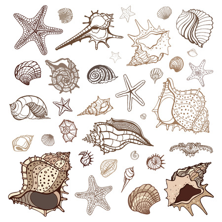 Sea shells collection  Handdrawn vector illustration Ilustração