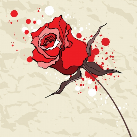 Grunge Red rose crumpled paper illustration  Vector
