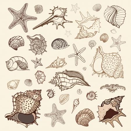 Zee schelpen verzamelen. Handgetekende vector illustration