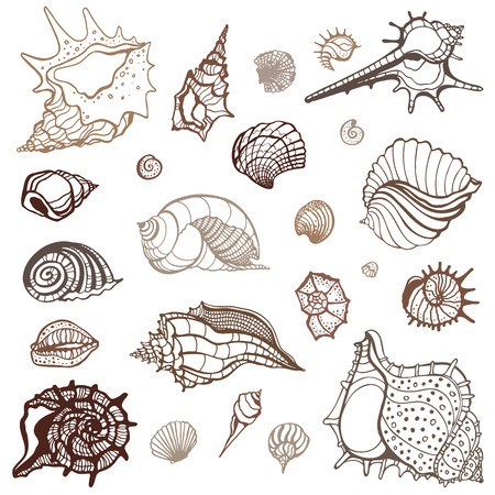 cockleshell: Grange Sea shells collection  Hand drawn vector illustration