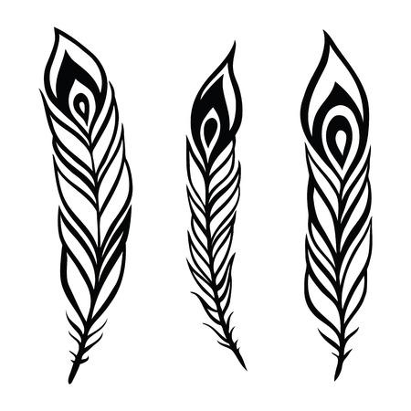 pluma blanca: Vector pluma de la vendimia fijado. Vectores