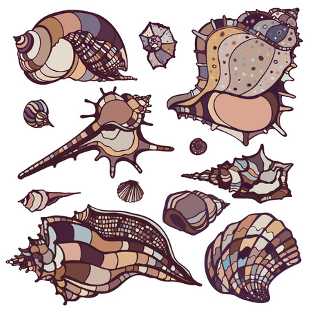 cockleshell: Sea shells collection  Hand drawn vector illustration