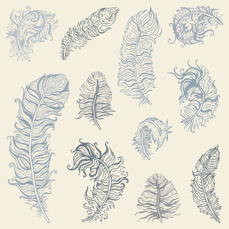 feather vector: Vintage Feather vector set. Hand drawn illustration.