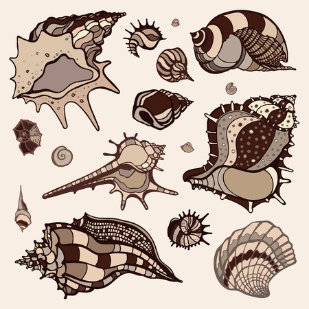 Sea shells collection. Hand drawn vector illustration