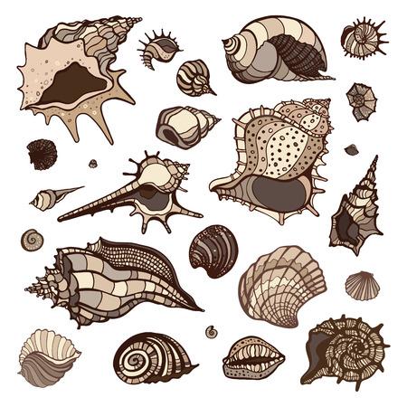 Sea shells collection. Hand drawn vector illustration Vector