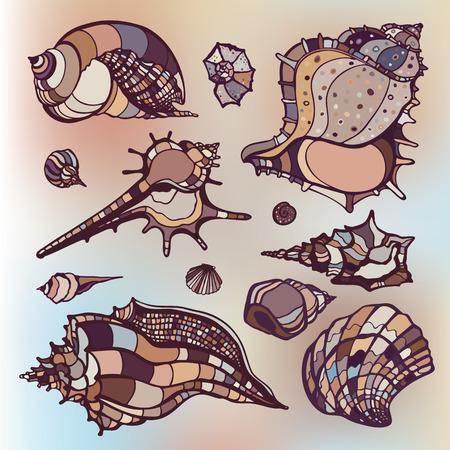 Sea shells collection. Hand drawn vector illustration. Vector