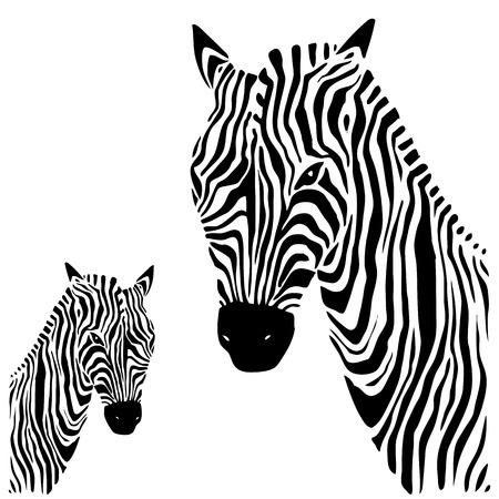 Zebra. Vector illustration. Vector