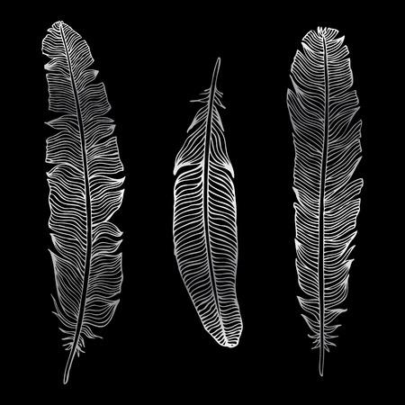 pluma: Silueta de la pluma de la vendimia. Conjunto de vectores ilustración de mano