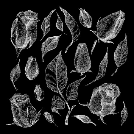 botanical illustration: Roses Botanical set. Black and white Dotwork Flowers. Vintage engraved illustration style.
