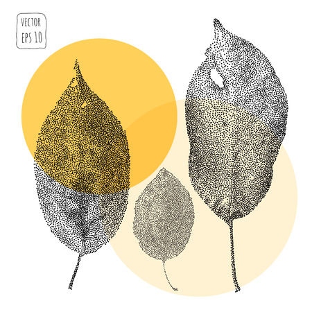 pressed: Leaves. Pattern with leaf. Hand Drawn vector Illustration