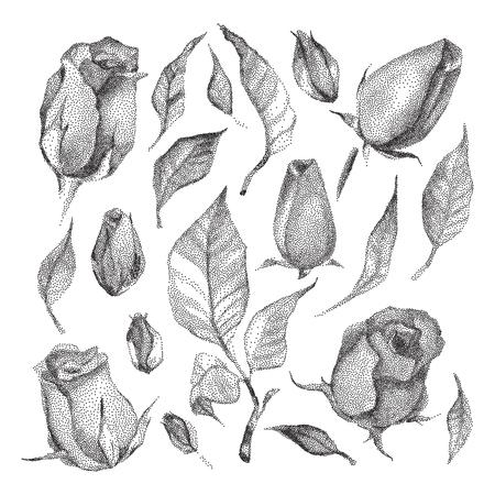 white roses: Roses Botanical set. Black and white Dotwork Flowers. Vintage engraved illustration style.