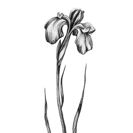 white flowers: Flower. Black and white Dotwork. Vintage engraved illustration style