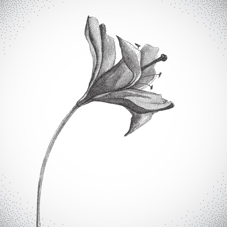 white blossom: Flower. Black and white Dotwork. Vintage engraved illustration style