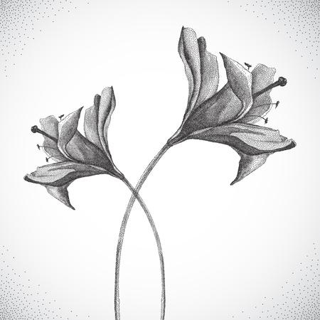 blanco: Flor. Blanco y negro Dotwork. Vintage estilo ilustración grabada