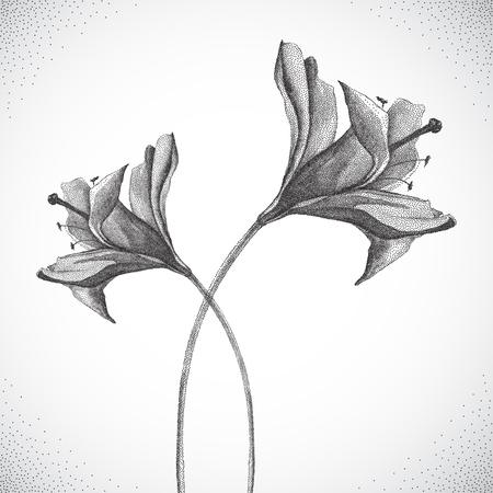 white backgrounds: Flower. Black and white Dotwork. Vintage engraved illustration style