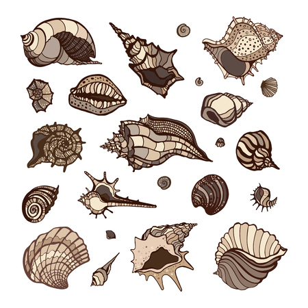 cockle: Sea shell collection isolated on white background. Hand drawn Vector shells for your design.