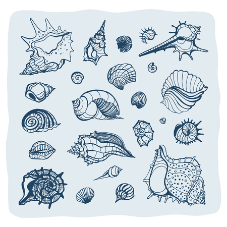 conch: Collection of seashells. Hand drawn vector Illustration. Sea shell set