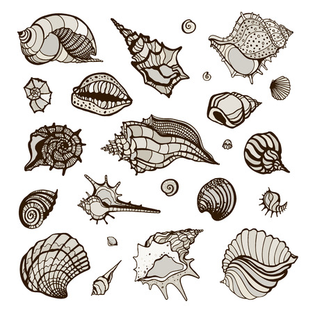 cockleshell: Set with various sea shells. Vector hand drawn illustration. Illustration