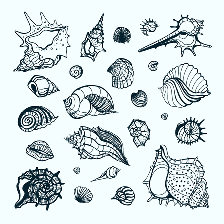 Set with various sea shells. Vector hand drawn illustration. Illustration