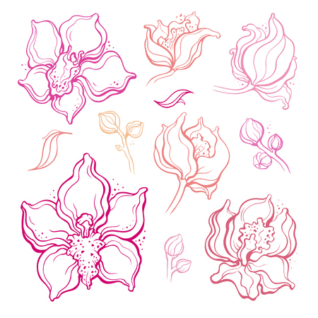 Floral set, Orchids. Beautiful Hand Drawn Design element