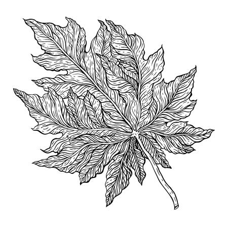 Outline Leaf. Hand drawn Monochrome realistic illustration